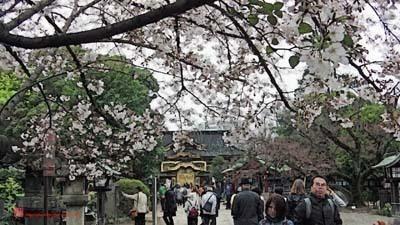 上野公園_IMGA0402_pse_Cartoon+Waterpixels+Oilify_Squoosh_s.jpg